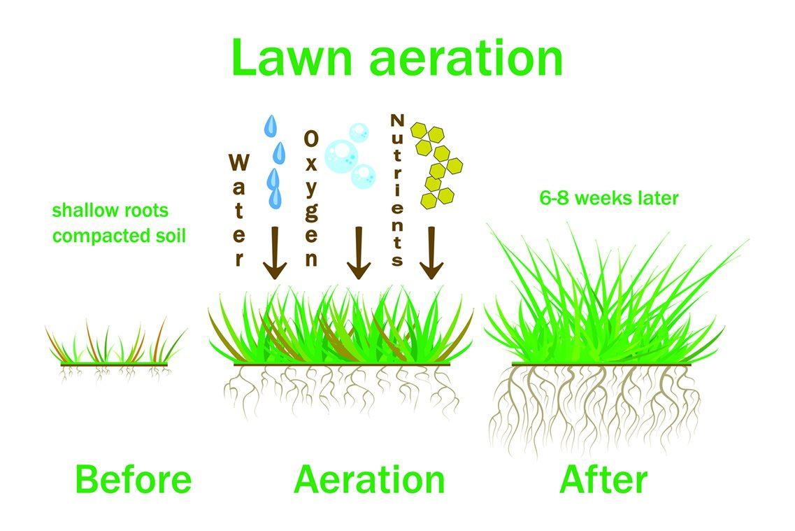 Lawn Aeration from Greengrass Lawncare